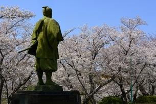 東御崎展望台広場,満開の桜と大石内蔵助像の写真素材 [FYI04487181]