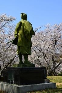 東御崎展望台広場広場,満開の桜と大石内蔵助像の写真素材 [FYI04487182]