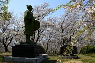 東御崎展望台広場広場,満開の桜と大石内蔵助像の写真素材 [FYI04487183]