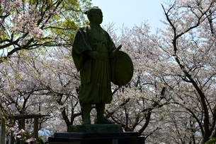東御崎展望台広場,満開の桜と大石内蔵助像の写真素材 [FYI04487184]