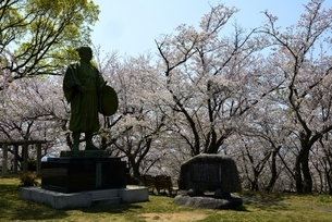 東御崎展望台広場広場,満開の桜と大石内蔵助像の写真素材 [FYI04487185]