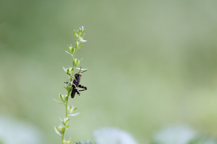 草に止まるバッタの幼虫の写真素材 [FYI04487261]