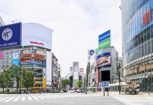 東京 渋谷 スクランブル交差点 自粛の写真素材 [FYI04487656]