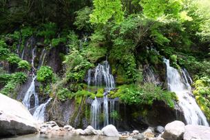 滝と緑の風景の写真素材 [FYI04487770]