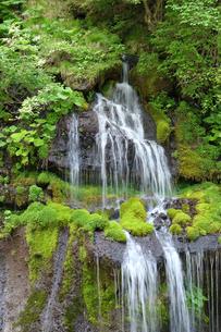 滝と緑の風景の写真素材 [FYI04487771]
