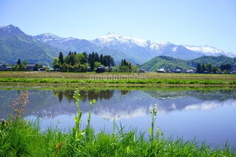 米処南魚沼の田植え前の田んぼに張られた水に、雪山と新緑が映る春の風景の写真素材 [FYI04487800]