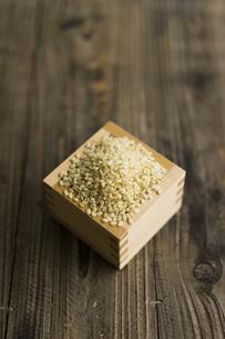 升に入った玄米の写真素材 [FYI04487842]