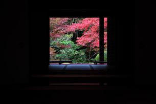 金剛輪寺紅葉 和室より庭園を望むの写真素材 [FYI04488114]