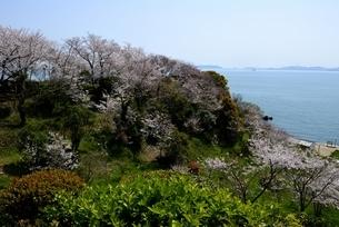 満開の桜と赤穂御崎海岸,瀬戸内海,播磨灘の写真素材 [FYI04488244]