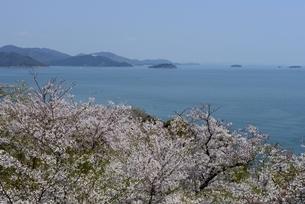 満開の桜と赤穂御崎海岸から瀬戸内海,播磨灘の写真素材 [FYI04488259]