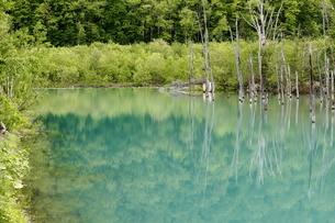 新緑と青い池の写真素材 [FYI04488260]