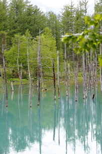 青い池の写真素材 [FYI04488263]