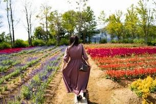 お花畑と女の子の写真素材 [FYI04488499]