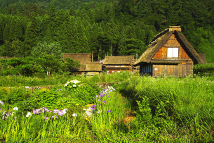 世界文化遺産 白川郷合掌造り集落の写真素材 [FYI04488517]