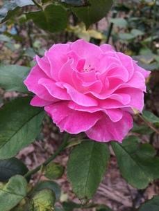 花の写真素材 [FYI04488532]