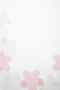 桜のモチーフの写真素材 [FYI04488717]