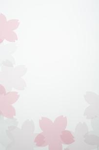 桜のモチーフの写真素材 [FYI04488718]