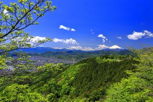 新緑の菜の花台から望む富士山の写真素材 [FYI04488968]