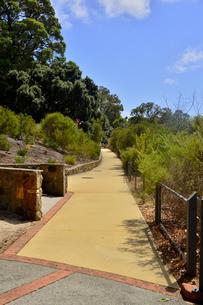 オーストラリア・西オーストラリア州のパースシティのキングスパークの木々に囲まれた歩道の光景の写真素材 [FYI04489090]