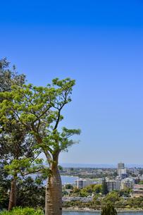 オーストラリア・西オーストラリア州のパースシティのキングスパークに生えるボアブ(アオイ科)と眼下に広がるスワンリバーとパースの街並みの写真素材 [FYI04489094]