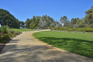 オーストラリア・西オーストラリア州のパースシティのキングスパークの中の木々に囲まれた歩道の写真素材 [FYI04489107]
