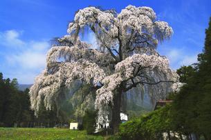 北小倉のしだれ桜の写真素材 [FYI04489122]
