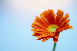 花しずく光の写真素材 [FYI04489499]