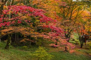 奈良県 鳥見山公園の紅葉の写真素材 [FYI04490080]