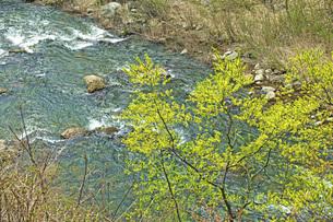 春の清流の写真素材 [FYI04490177]