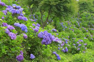 美の山公園の写真素材 [FYI04490239]