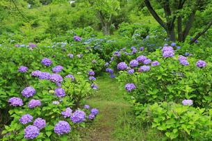 美の山公園の写真素材 [FYI04490240]