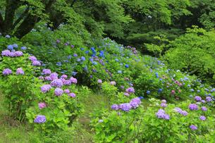 美の山公園の写真素材 [FYI04490241]