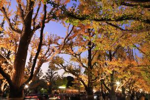 神宮外苑いちょう並木の紅葉の写真素材 [FYI04490249]
