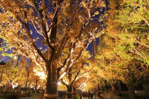 神宮外苑いちょう並木の紅葉の写真素材 [FYI04490250]