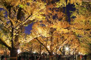 神宮外苑いちょう並木の紅葉の写真素材 [FYI04490251]