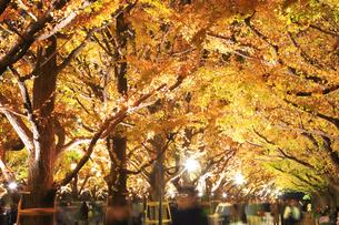 神宮外苑いちょう並木の紅葉の写真素材 [FYI04490252]