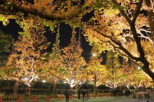 神宮外苑いちょう並木の紅葉の写真素材 [FYI04490253]