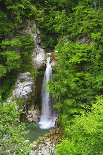 白山白川郷ホワイトロード 岩底の滝と新緑の写真素材 [FYI04490411]