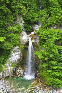 白山白川郷ホワイトロード 岩底の滝と新緑の写真素材 [FYI04490412]