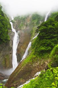 称名滝とハンノキ滝に霧の写真素材 [FYI04490413]
