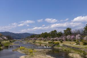 賀茂川 半木の道と桜並木の写真素材 [FYI04490592]