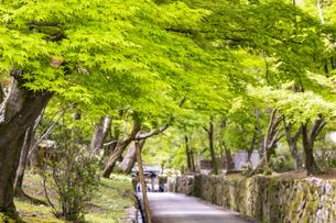 興聖寺琴坂の新緑の写真素材 [FYI04490613]