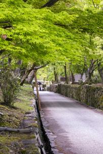 興聖寺琴坂の新緑の写真素材 [FYI04490615]