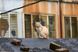 猴硐猫村 Houtong Cat Village 屋根の上のネコの写真素材 [FYI04490934]