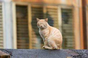 猴硐猫村 Houtong Cat Village 屋根の上のネコの写真素材 [FYI04490935]