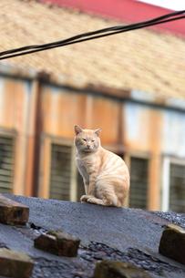 猴硐猫村 Houtong Cat Village 屋根の上のネコの写真素材 [FYI04490936]