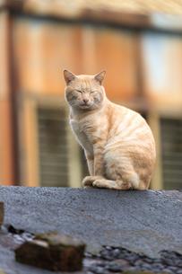 猴硐猫村 Houtong Cat Village 屋根の上のネコの写真素材 [FYI04490937]