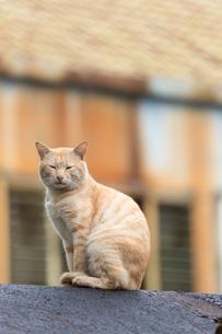 猴硐猫村 Houtong Cat Village 屋根の上のネコの写真素材 [FYI04490938]