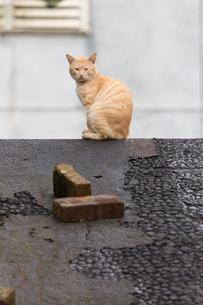 猴硐猫村 Houtong Cat Village 屋根の上のネコの写真素材 [FYI04490940]
