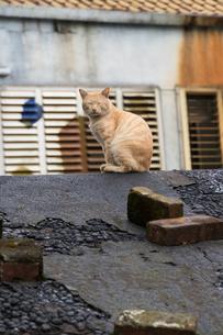 猴硐猫村 Houtong Cat Village 屋根の上のネコの写真素材 [FYI04490955]